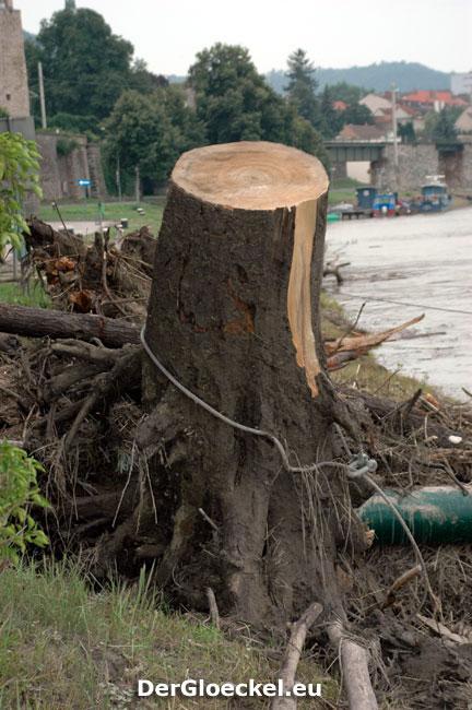 Naturgewalt Wasser entwurzelte unzählige Bäume | Foto: DerGloeckel.eu